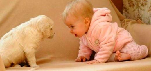 Kutya+gyerek vicces video