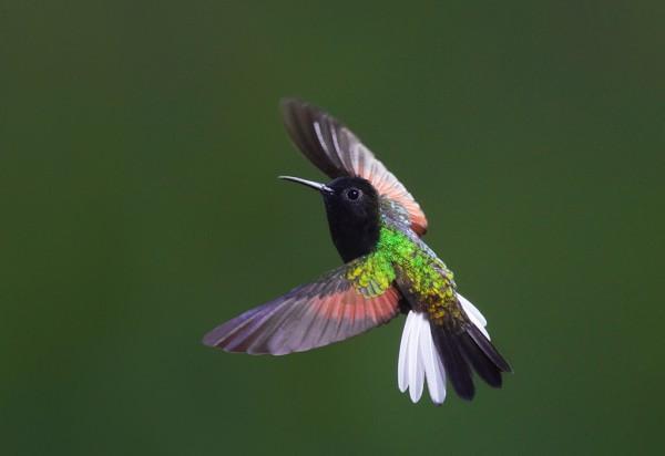 10 Kolibri spirituális jelentése