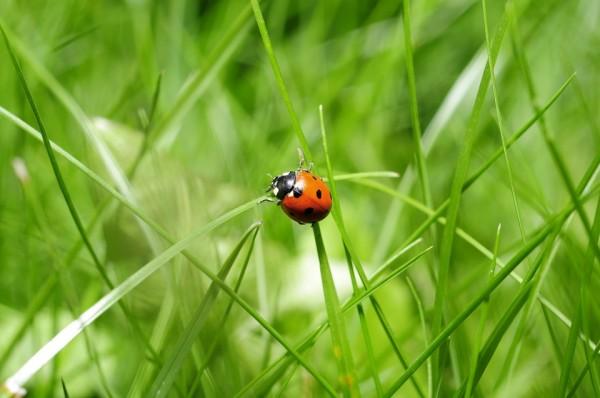 vers a természetről,A természet apró csodái, katicabogár