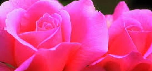rózsaszín tulajdonsága