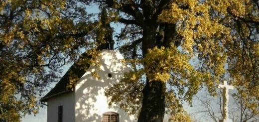 év európai fája 2016