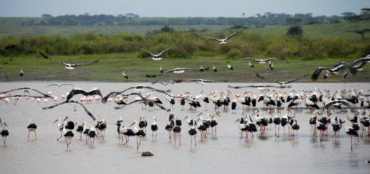 gólya hozza,gólyák a víznél
