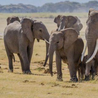 állat elefánt csorda